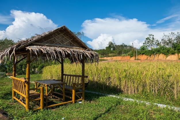 Bambuskabinensitz in der nähe von paddy-reisfeld gegen blauen himmel im frühjahr. landwirtschaft in tropischen