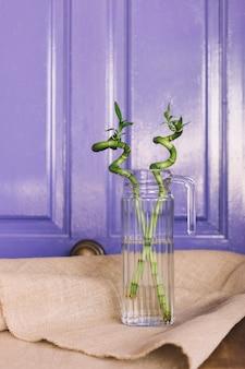 Bambuspflanze in glasflasche