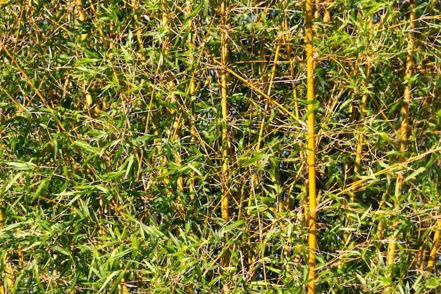 Bambusrohr am ufer des flusses