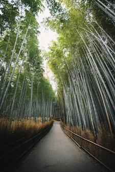 Bambuswald in arashiyama, japan