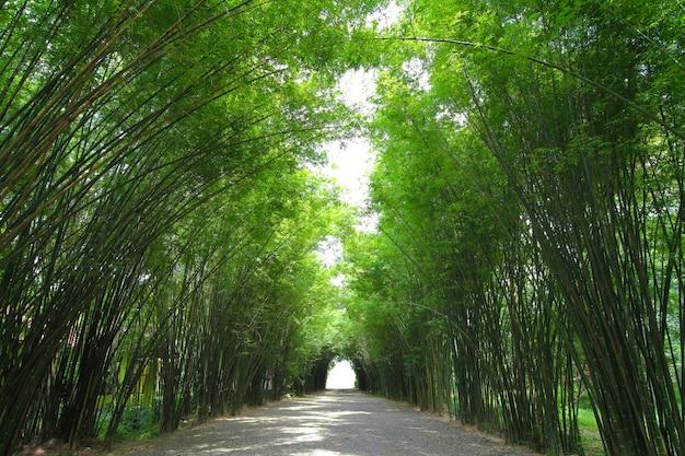 Bambuswald ist in thailand schön