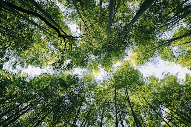Bambuswald mit filmweinleseart