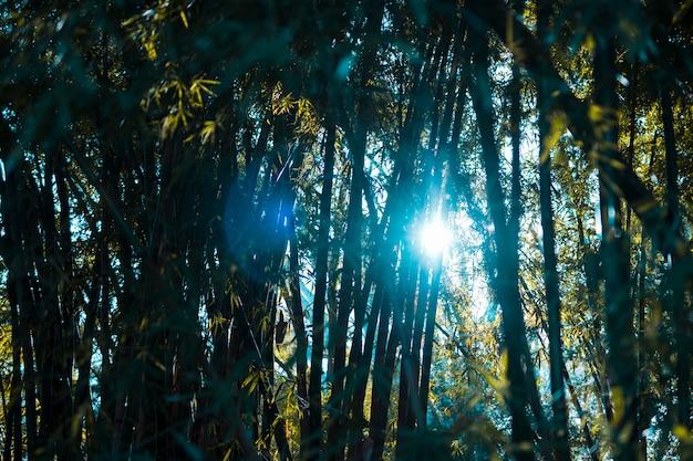 Bambuswaldlandschaft
