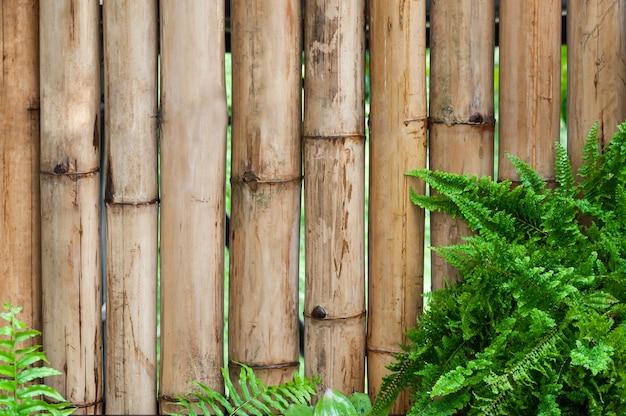 Bambuswand mit blättern von farnpflanzen