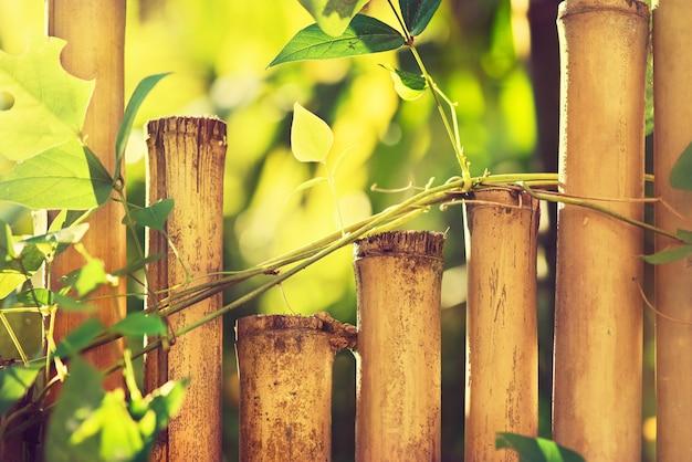 Bambuszaun bedeckt durch frische grüne pflanzen. wilde pflanzen an der bambuswand. stillleben. südasien, thailand.