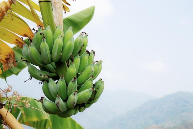Banane mit dem himmel.