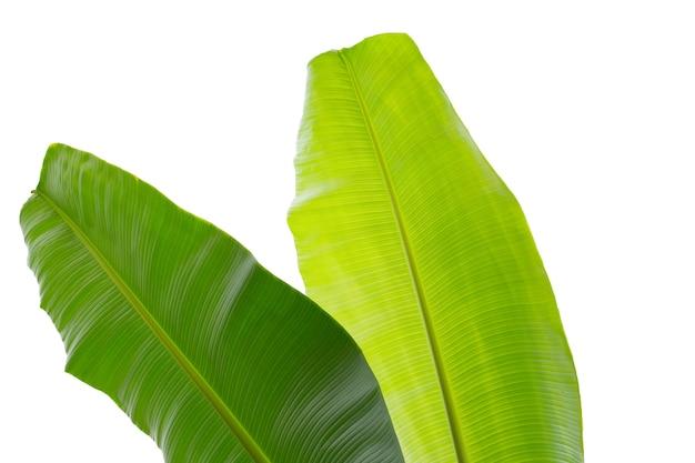 Bananenblätter auf weißem hintergrund,