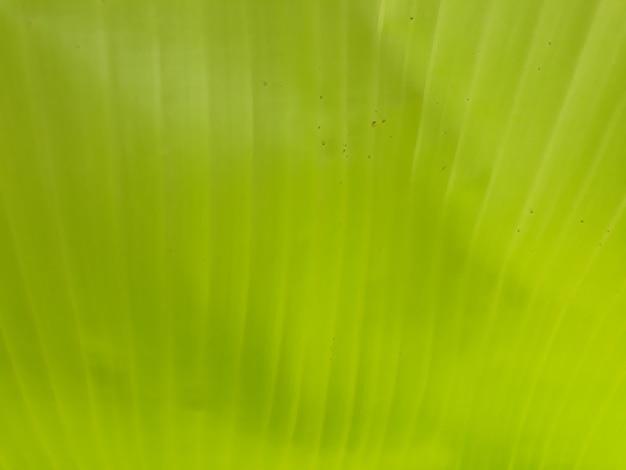 Bananenblätter hintergrund