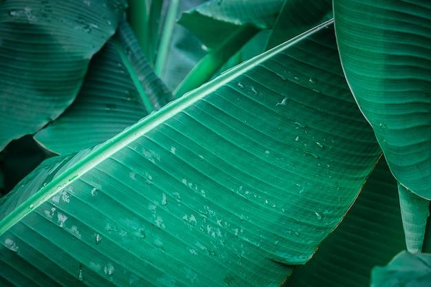 Bananenblatt hintergrund