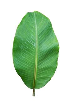Bananenblatt lokalisiert auf weißer wand