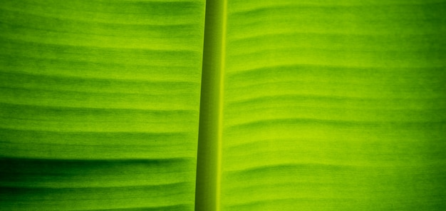 Bananenblatt schließen detaillierten hintergrund