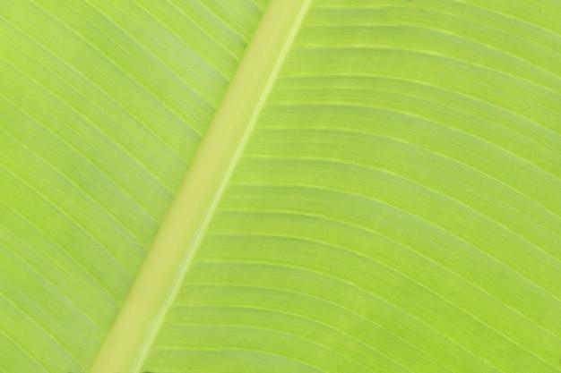 Bananenblattabschluß herauf beschaffenheit
