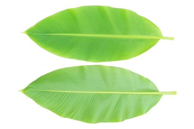 Bananenblattfront und -rückseite lokalisiert auf weiß. mit clupping weg