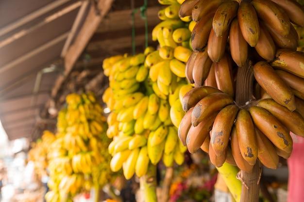 Bananenbündel im obstladen auf sri lanka. ceylon tropische süßigkeiten