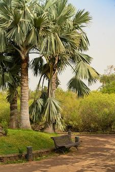 Bank unter der palme in einem öffentlichen park mit sandsturm, calima bedeckt. teneriffa, spanien