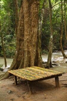 Bank von bambusstielen nahe baum im regenwald durch fluss