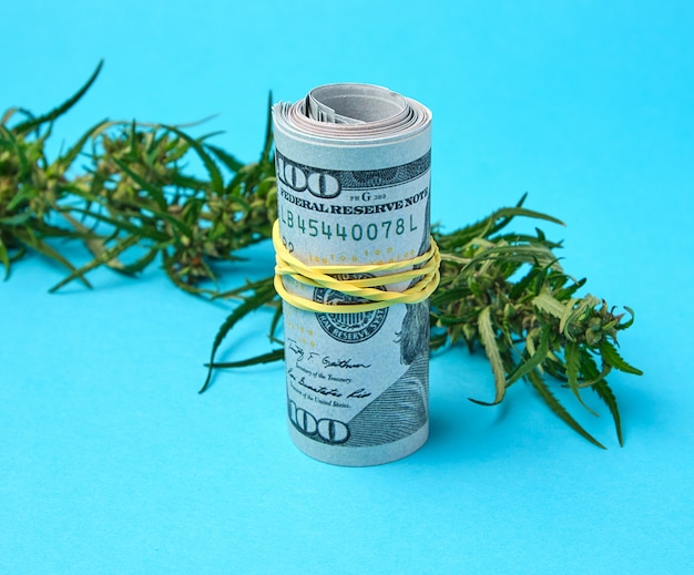 Banknoten der amerikanischen dollar und des grünen blattes des hanfs