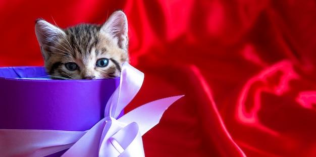Banner mit platz für text. gestreiftes kätzchen späht aus der geschenkbox auf rotem hintergrund. geburtstag und feiertag