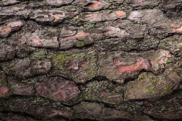 Bark textur hintergrund