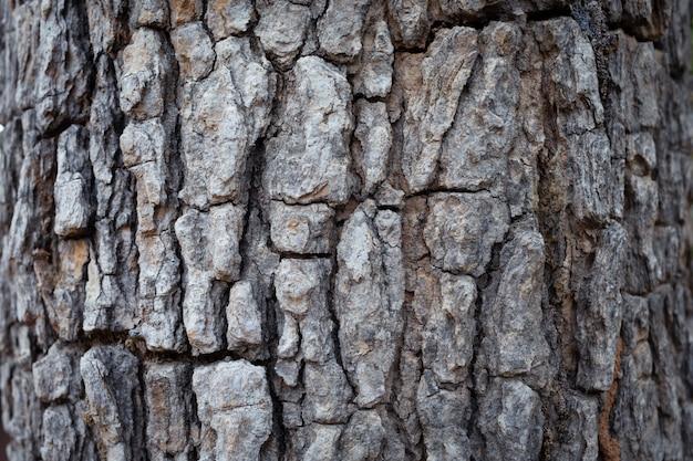 Barken-hintergrund-beschaffenheitsnatur