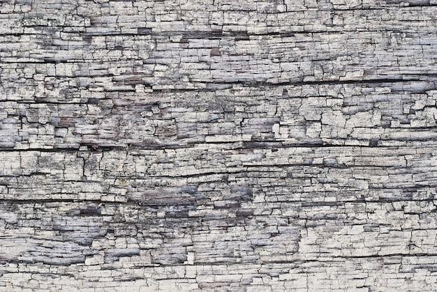 Barkenbeschaffenheit, grauer trockener hartholzabschluß oben