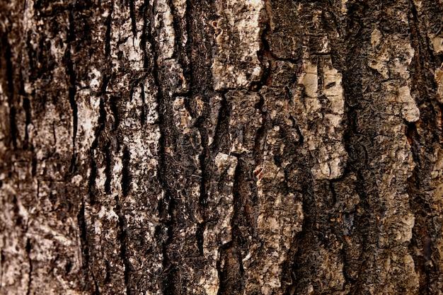 Barkenbeschaffenheitshintergrund, hölzerner beschaffenheitshintergrund, raue oberfläche
