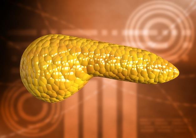 Bauchspeicheldrüse, organ des menschlichen körpers lokalisiert auf wissenschaftlichem hintergrund
