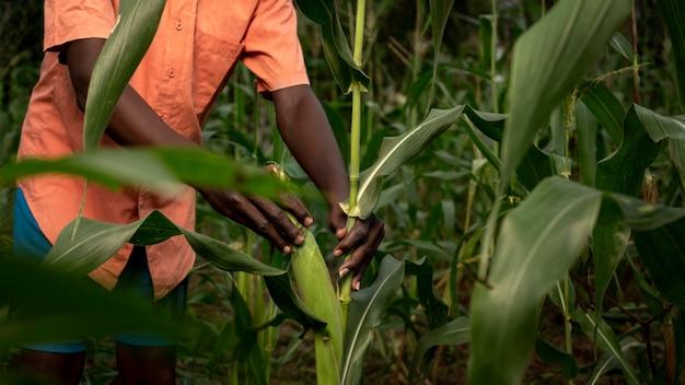 Bauer, der im maisfeld arbeitet, hautnah