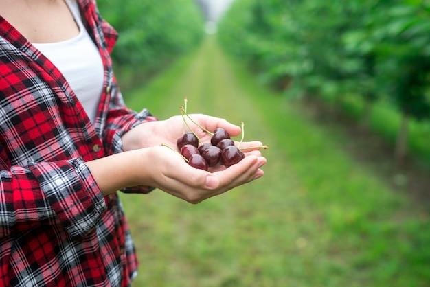 Bauer, der kirschfrucht in seinen händen im obstgarten hält