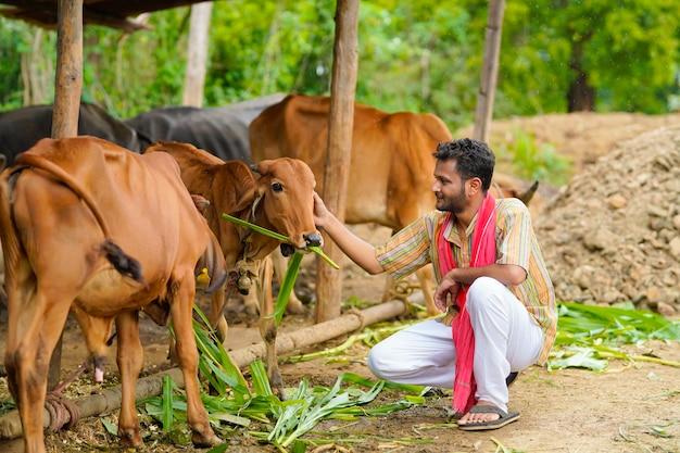 Bauer, der vieh auf seinem bauernhof füttert