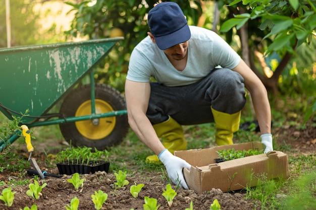 Bauer in einer mütze und gelben gummistiefeln, die junge sämlinge von salatsalat im gemüsegarten pflanzen. töpfe, kisten mit seedlights und gartenauto im hintergrund. ökologie wachsendes konzept.