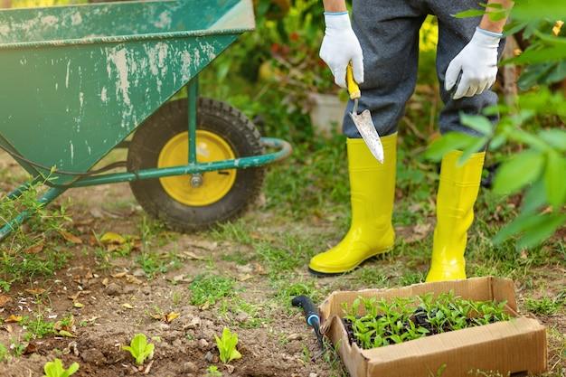 Bauer in gelben gummistiefeln und handschuhen pflanzt junge setzlinge von salatsalat und pfeffer im gemüsegarten. töpfe, kisten mit seedlights und gartenauto im hintergrund. ökologie wachsendes konzept.