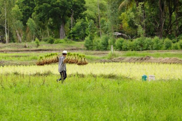 Bauer in thailand