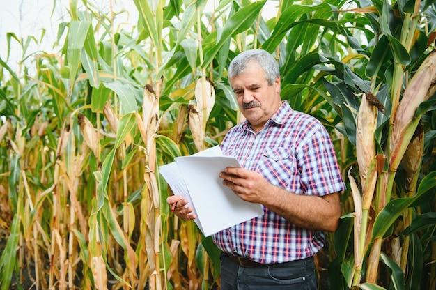 Bauer inspiziert maiskolben auf seinem feld