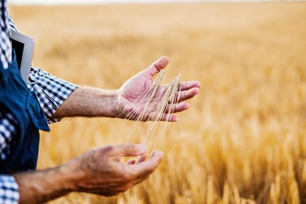 Bauer kontrolliert sein weizenanbaufeld.
