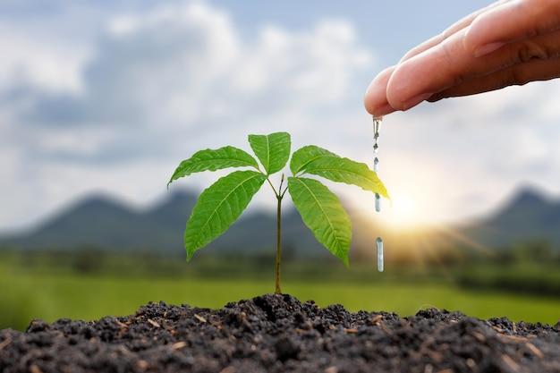 Bauern gießen kleine pflanzen von hand mit dem konzept des weltumwelttags.