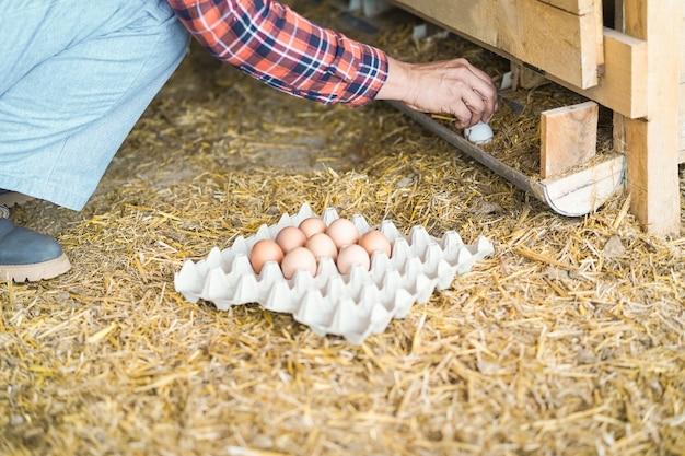 Bauernfrau, die organische eier im hühnerstall aufnimmt