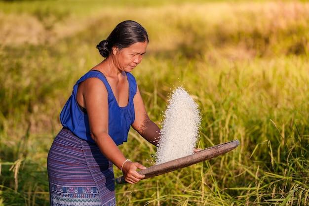 Bauernfrau dreschte reis, um spreu zu entfernen