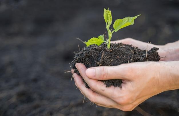 Bauernhand, die erde mit bäumchenpflanze hält