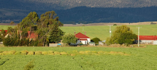 Bauernhaus und bäume