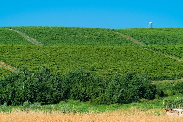 Bauernhöfe mit grünen weinbergen