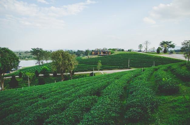 Bauernhof des grünen tees mit straße und cloundy himmel