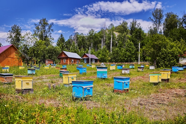 Bauernhof des imkers, viele bunte hölzerne bienenstöcke in den landwirtschaftlichen gebieten, sonniger tag.
