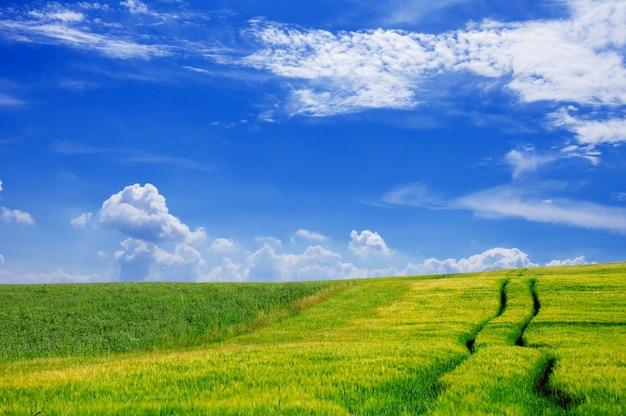 Bauernhof-feld mit einem himmel mit wolken