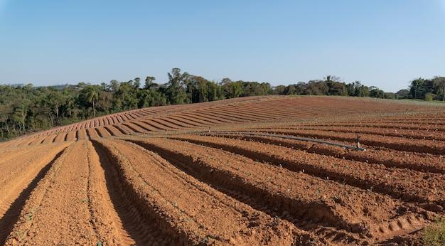 Bauernhof mit kaum geborenen kleinen pflanzen