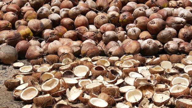 Bauernhof mit nüssen für die öl- und zellstoffproduktion. haufen reifer kokosnüsse. traditionelle asiatische landwirtschaft.