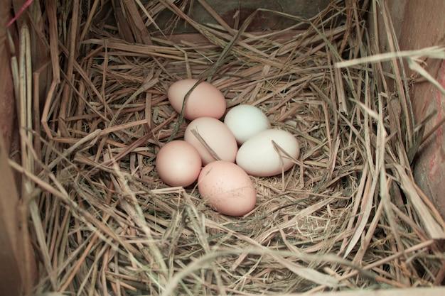 Bauernhofeier frische eier