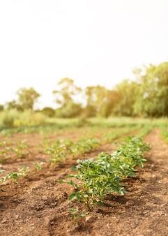 Bauernhofkonzept mit grünen pflanzen