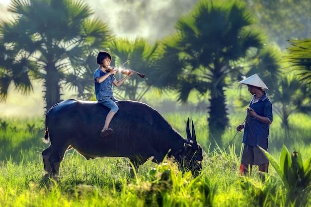 Bauernmädchen spielt violine auf büffel mit papa sorgfalt eng.