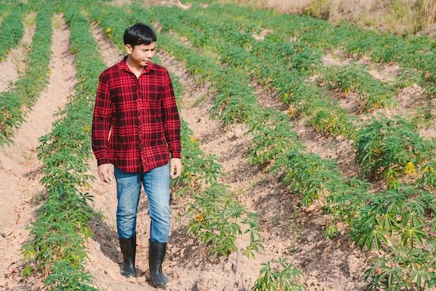 Bauernmann, der auf einem maniokfeld geht